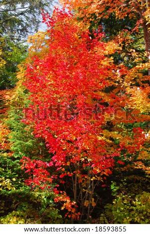 Fall colors in Algonquin Park in Ontario - stock photo