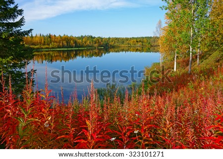fall colors in the finnish lapland