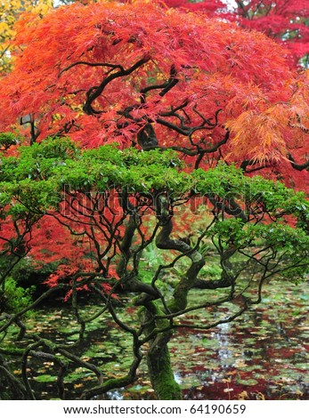 Fall colors of japanese maple and garden - stock photo