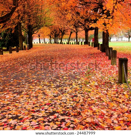 Fall colors of Trout Lake Park, Vancouver, Canada - stock photo