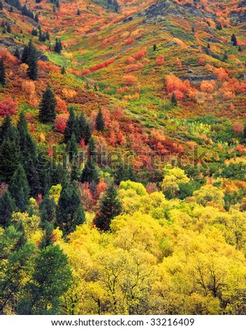 Fall colors on a hillside in the Wasatch-Cache National Forest, Utah. - stock photo