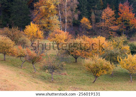 Fall colors trees - stock photo
