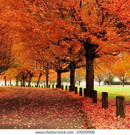 Fall colors, Trout Lake Park, Vancouver, Canada - stock photo