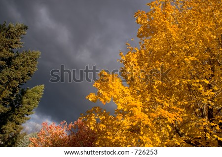 Fall colors with stormy sky - stock photo