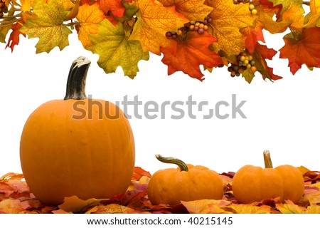 Fall coloured leaves with a pumpkin isolated on a white background, Fall Leaves