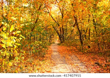 Fall day. Beautiful landscape with trees and road in autumn forest
