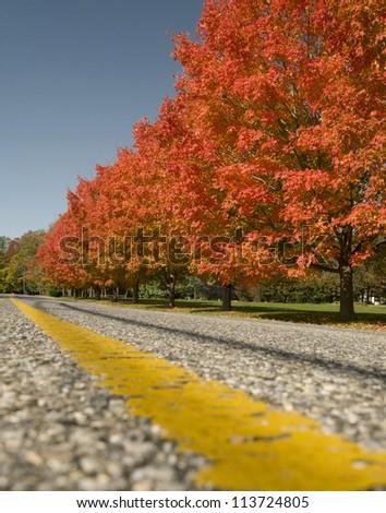 Fall Drive - stock photo