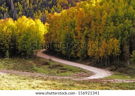Fall drive on curved road through sun illuminated changing Aspen tree in mountains