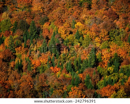 Fall Explosion of Colours - stock photo