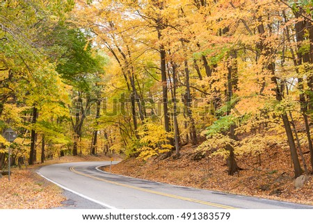 Fall foliage and a winding road through a wooded area.