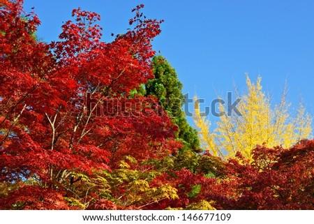 Fall foliage at Eikando Temple in Kyoto, Japan. - stock photo