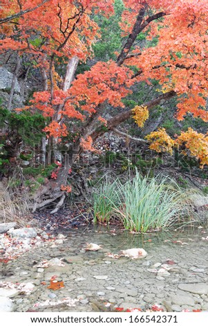 Fall Foliage at Lost Maples