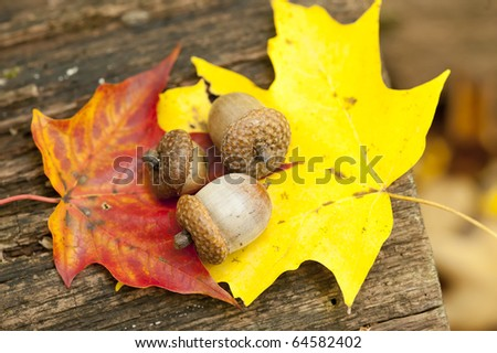 Fall foliage. Autum background with leaves