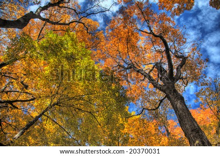 Fall foliage. HDR image created by combining three different exposures. - stock photo