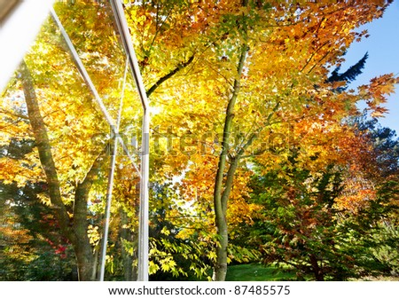 Fall foliage in the afternoon sunlight through an open window