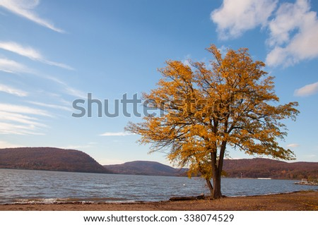 Fall foliage lone tree at river front - stock photo