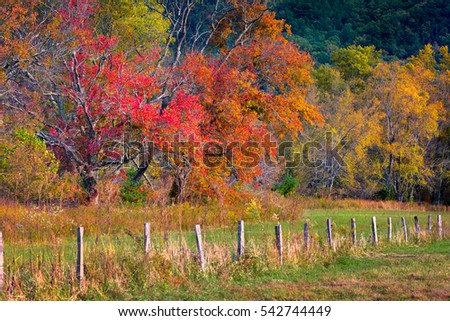 Fall foliage on display on Sparks Road in Cade's Cove, Great Smoky Mountains National Park, TN