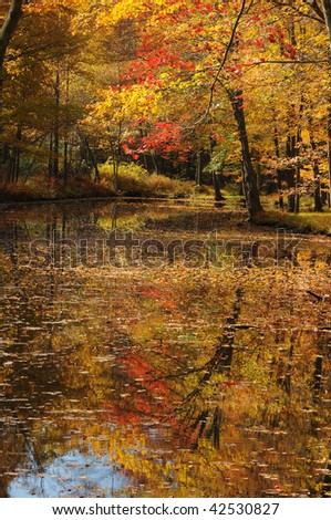 Fall foliage reflected in a pond with brilliant color.