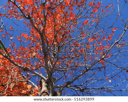 fall foliage with orange leaves and brown branches from low angle view