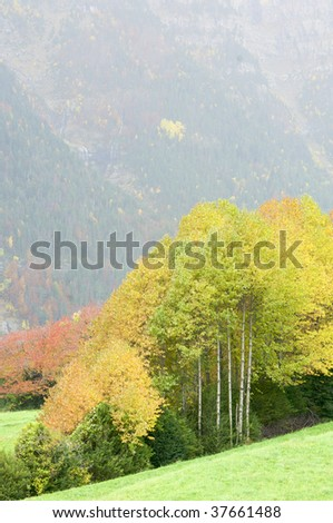 Fall forest in the Pyrenees