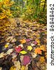 Fall forest path with fallen leaves covering the ground, Algonquin Park, Canada. - stock photo