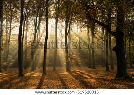 Fall forest with sun light through the trees