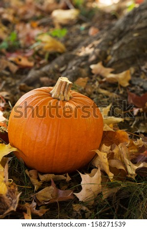 Fall Halloween pumpkin in colorful leaves