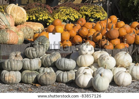 Fall harvest is here with lots of fall flowers pumpkins & more