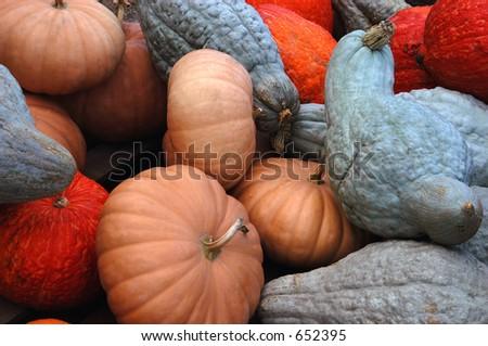 Fall Harvest VI - stock photo