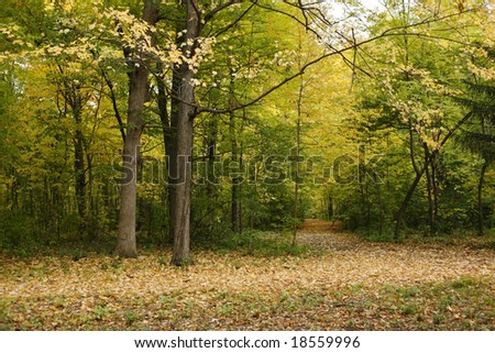 Fall in a park with trails covered by leaves