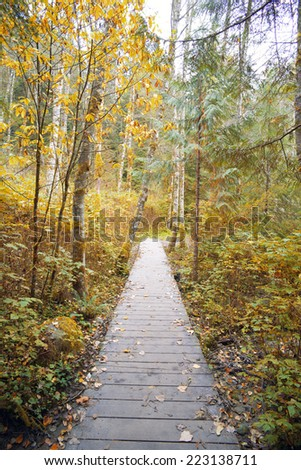Fall in forest - orange tress with foot bridge - stock photo