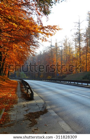 Fall in park beautiful autumn orange  wood tree and road in Poland