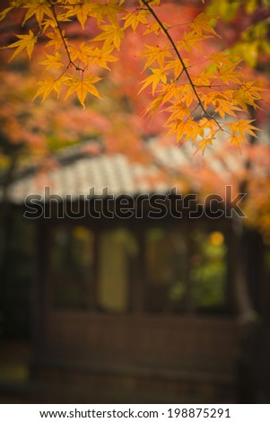 fall in the japan