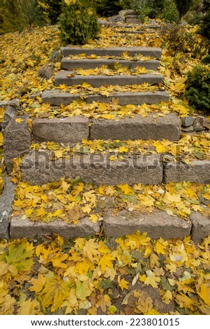 Fall in the Moscow park - stock photo