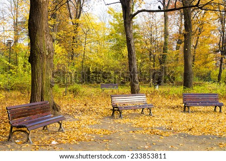 Fall in the public park - stock photo