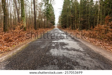 Fall landscape. Country asphalt road in the autumn forest. Misty hazy autumnal day. - stock photo