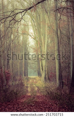 Fall landscape. Country road in the autumn forest. Misty hazy autumnal day. - stock photo