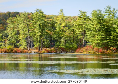 Fall landscape with the forest lake. - stock photo