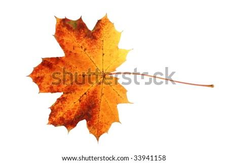 Fall leaf - stock photo