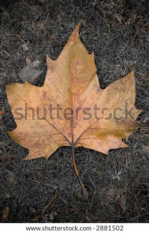 fall leaf in the park - stock photo