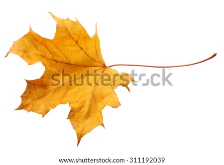Fall leaf isolated on a white background
