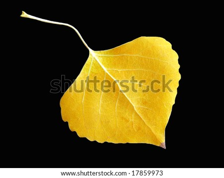 Fall Leaf on Black Background - stock photo