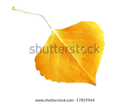 Fall Leaf on White Background - stock photo