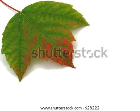 Fall leaf with room for copy - stock photo
