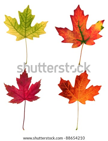fall leafs isolated on white background - stock photo
