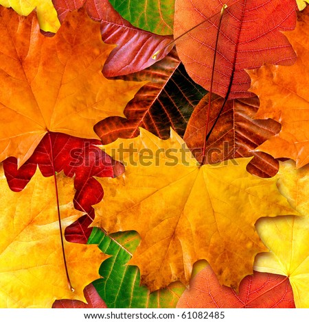 Fall leafs seamless background - texture pattern for continuous replicate. - stock photo