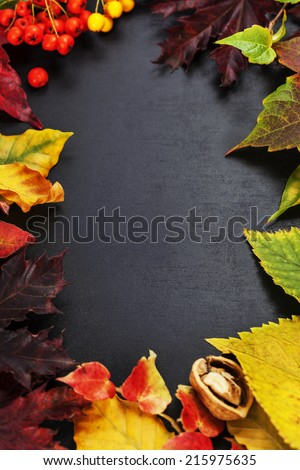 Fall leaves for an autumn composition with copy space - stock photo