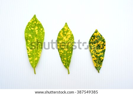Fall leaves in different size - stock photo