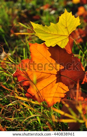 Fall leaves in grass season backlight - stock photo