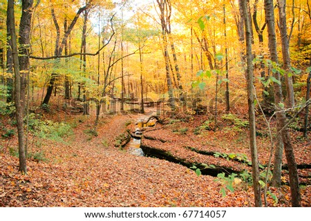 fall leaves in the forest and a stream - stock photo